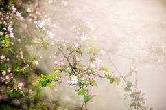 spring, blooming in mist royalty free stock image