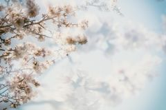 Spring blooming. Pink almond blossoms closeup, blur background, copy space Stock Photography