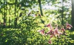 Spring blooming plants against a background of  forest blurred landscape, background Royalty Free Stock Photo