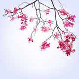 Spring Blooming Sakura branch of blots background Stock Photo