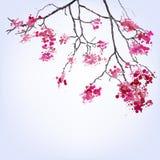 Spring Blooming Sakura branch of blots background. Design Stock Photo