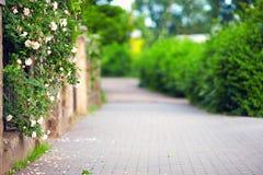 Spring blooming sidewalk Royalty Free Stock Images