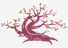 Spring blooming tree Stock Image