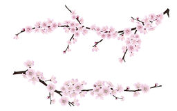 Spring blooming tree branches with pink flowers Stock Photo