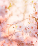 Spring blooming tree dreamy sunny background. Spring blooming tree, dreamy sunny background, beautiful fine art photo style, little white flowers on tree branch stock photography