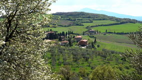 Spring. Blooming tree in the foreground and typical Tuscan landscape. Province of Siena. Tuscany, Italy stock video