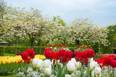 Spring blooming trees Stock Photo