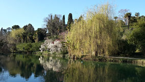 Spring blooming trees in dendropark at sunny day. Spring blooming trees reflection on the lake in the city park Royalty Free Stock Photography