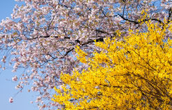 Spring blooming trees Stock Images