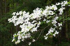 Spring Blooms Stock Image