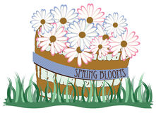 Spring Blooms Royalty Free Stock Photos