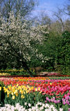 Spring Blooms in Belgium Stock Image