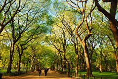 Spring Blooms in Central Park. Spring comes to the Mall in New York& x27;s Central Park Royalty Free Stock Photos
