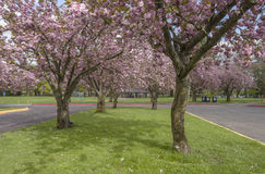 Spring blooms in a public park Oregon. Royalty Free Stock Photography