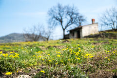 Spring blooms in the Tuscan countryside Royalty Free Stock Photo