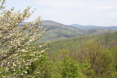 Spring blooms in Virginia mountains Stock Photo