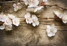 Free Spring Blossom Stock Photo - 19250450