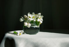 Spring blossom. Blossoms in a vase in soft morning light Royalty Free Stock Images