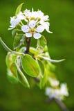 Spring blossom Stock Photos