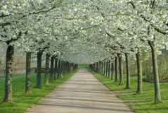 Spring blossom arches Stock Photography