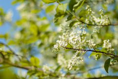 Spring Blossom art design. Orchard scene. Blossoming tree with sunbeams. Beautiful green nature background Stock Photo
