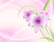Spring blossom background. Early spring blossoms on the pink abstract background royalty free illustration