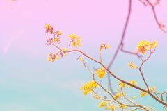 Spring blossom background.Beautiful nature scene with blooming tree.Sunny day blue sky .Spring flowers.Beautiful abstract blurred. Spring blossom background royalty free stock images