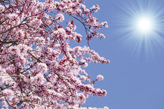 Spring blossom background royalty free stock images