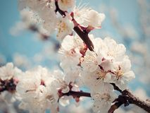 Spring blossom background Stock Photos