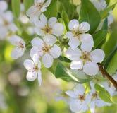 Spring blossom background Stock Photos
