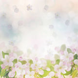 Spring Blossom Background Royalty Free Stock Photo