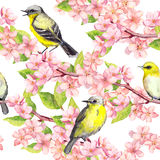 Spring blossom, birds at branches with cherry, apple, sakura flowers . Floral seamless pattern. Watercolor. Spring flowers blossom and birds at branches with stock illustration