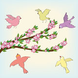 Spring blossom with birds doodles Royalty Free Stock Photo