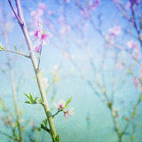 Spring blossom. Spring blossom bokeh. Pastel, painterly feel. Copy space Stock Photography