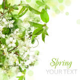 Spring blossom border. Abstract floral background royalty free stock photo