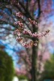 Spring blossom border with pink blooming tree. Beautiful nature scene with flowers on tree and sun flare. Sunny day. Beautiful stock image