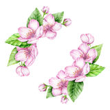 Spring Blossom Border. Watercolor illustration Stock Images