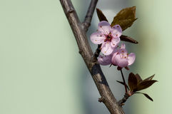 Spring blossom on branch stock photos