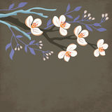 Spring blossom branch Royalty Free Stock Photos
