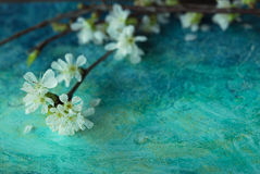 Spring Blossom branch royalty free stock images