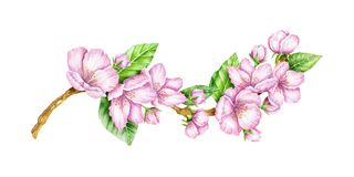 Spring Blossom. Cherry pink flowers. Blooming branch. Floral border. Watercolor illustration. Spring symbol. First flowers. Spring is comming Stock Photo