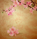 Spring blossom cherry tree and pink flowers on brown old paper g Royalty Free Stock Images