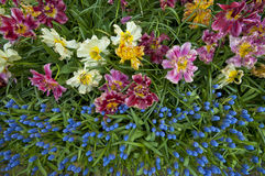 Spring Blossom Royalty Free Stock Photo