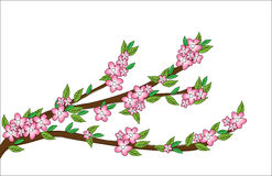 Spring blossom doodles Royalty Free Stock Photo