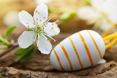 Spring blossom and easter egg Stock Images