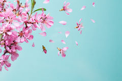 Spring blossom explosion Royalty Free Stock Photo