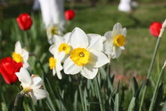 Spring blossom flowers Royalty Free Stock Photography