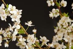 Spring blossom frame Stock Images