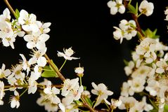 Spring blossom frame royalty free stock photos