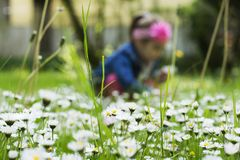 Spring blossom in the grass Stock Images